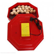 Incubatoare oua (22)